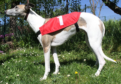 Renndecken Baju 6er Set Renndecken Baju 6er Set Windhunderennen Decken Racing Jackets